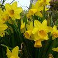 Le printemps avec bonheur...