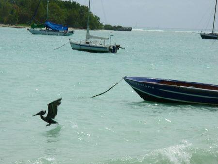 DSCN0251 Guadeloupe J7