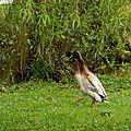 Parcs et Jardins LISLEDON 45 (10)