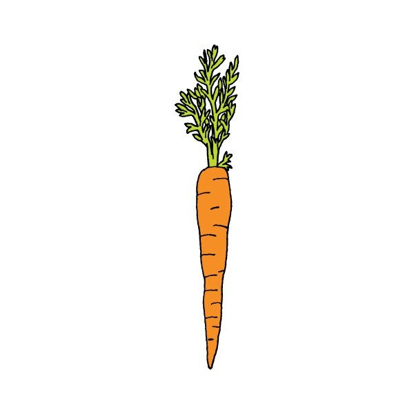 tattly_julia_rothman_carrot_web_design_grande