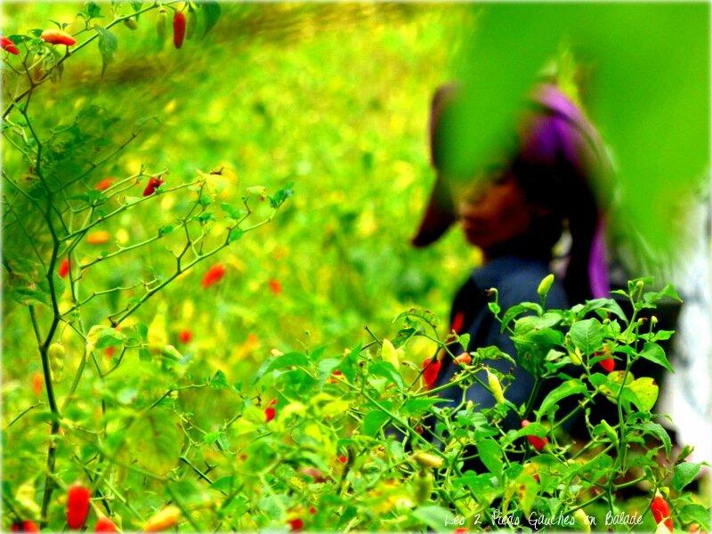 plantations à sidemen