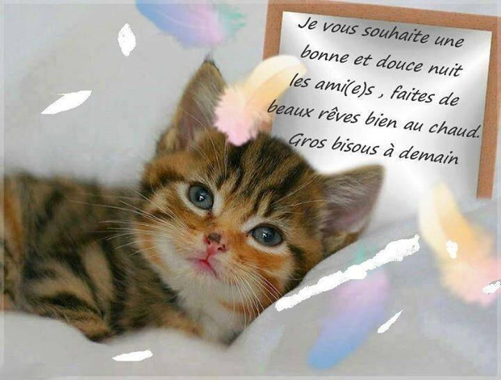 chat amical gratuit Meudon