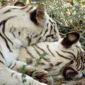 bannergetta zoo, dec 09 (45)