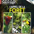 Les esprits des forêts pour un terre sauvage hs