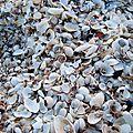 Minéral en Provence Coquillages plage Etang de Berre
