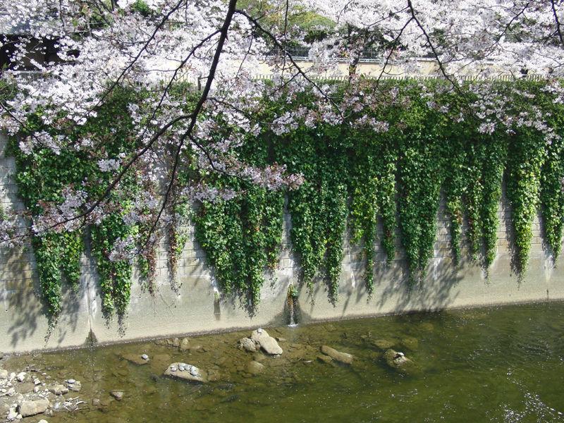 Edogawabashi_2-6