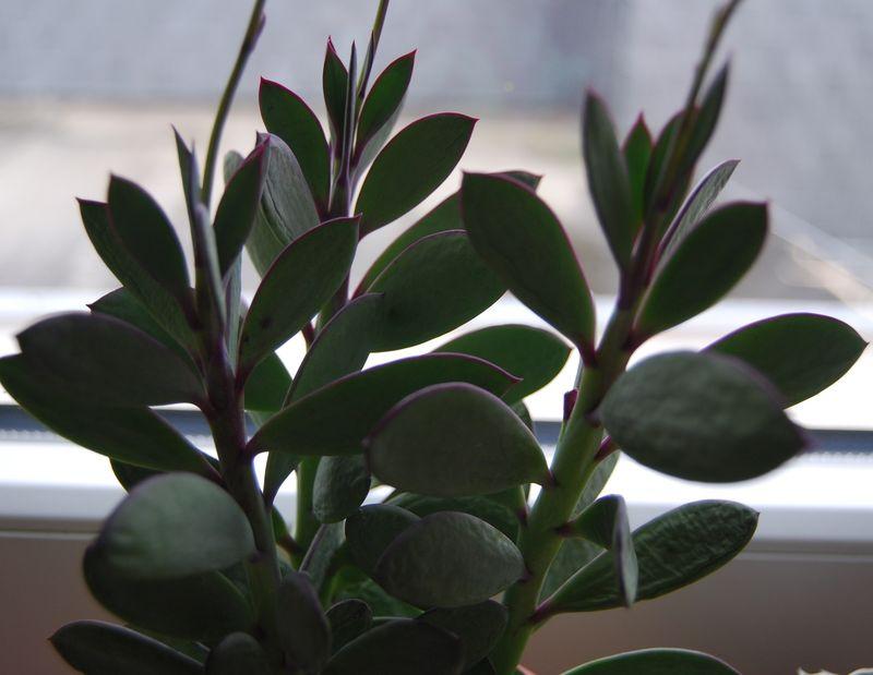 nouveaux cactus plantes grasses vivre c 39 est apprendre danser sous la pluie. Black Bedroom Furniture Sets. Home Design Ideas