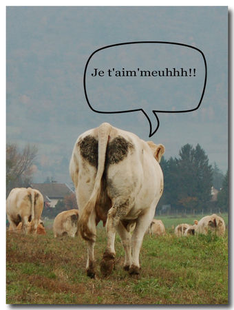 carte_vache