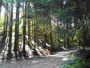Forêt coteaux Fort Belin Salins Jura
