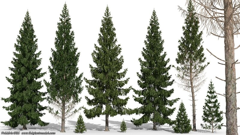 02 Picea abies Norway spruce fir tree 3d plant model factory 3ds cad max fbx obj image 1