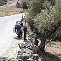 turquie : pres du lac de kapikiri entre les oliviers