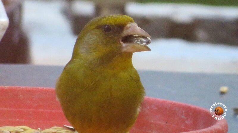 Oiseaux_1790