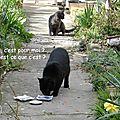 Histoire de chat ?