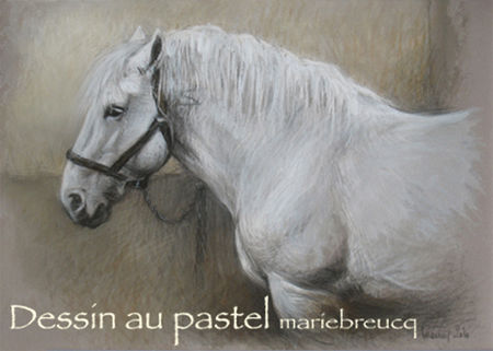 PercheronAttache