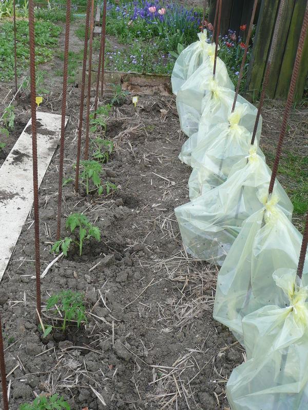 Plantation des pieds de tomates au jardin le jardin de for Plantation au jardin