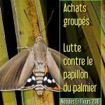 NAF 2016 - Achats groupés - Lutte contre le papillon du palmier