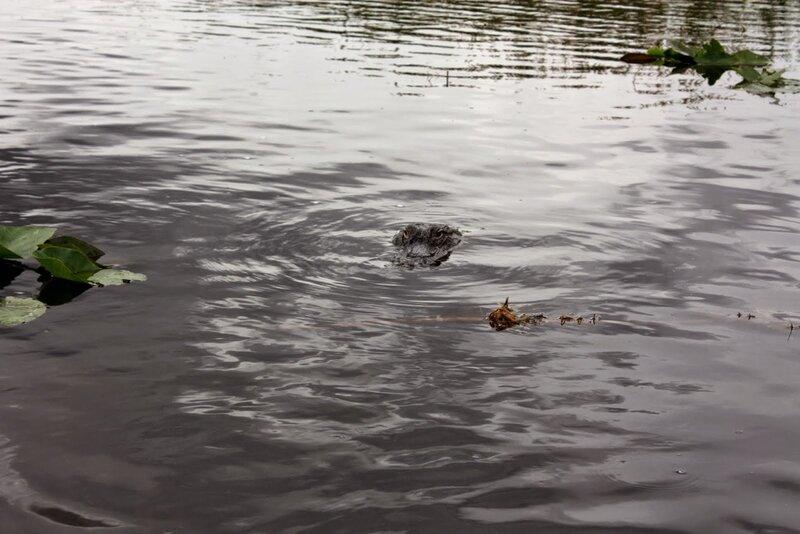J24 - 21 juillet 2014 Everglades (123).JPG