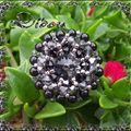 bague nuage black diamond-mystic black