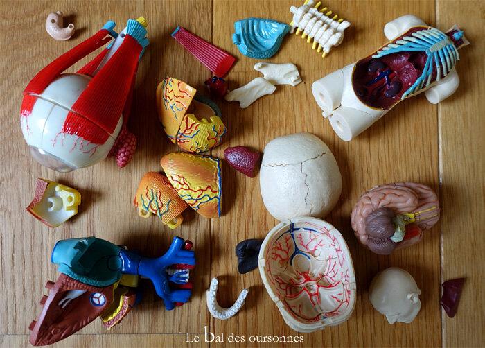 118 Braderie Lille Anatomie Médical Cabinet Curiosité