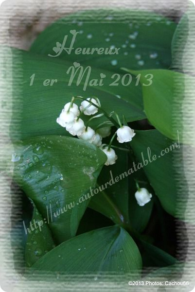 muguet 2013 ADMT