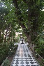 Figuier centenaire, Palais Salam