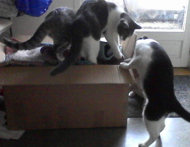 chats de chambery 2