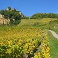 Vignes & Chateau Chalon sur rocher