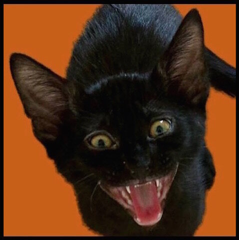 halloween_gao_foxy_cat_land