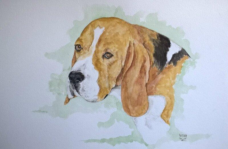 aquarelle beagle François Le Berre