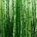 Collection Bambou