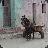 Cuba Trinidad Cheval