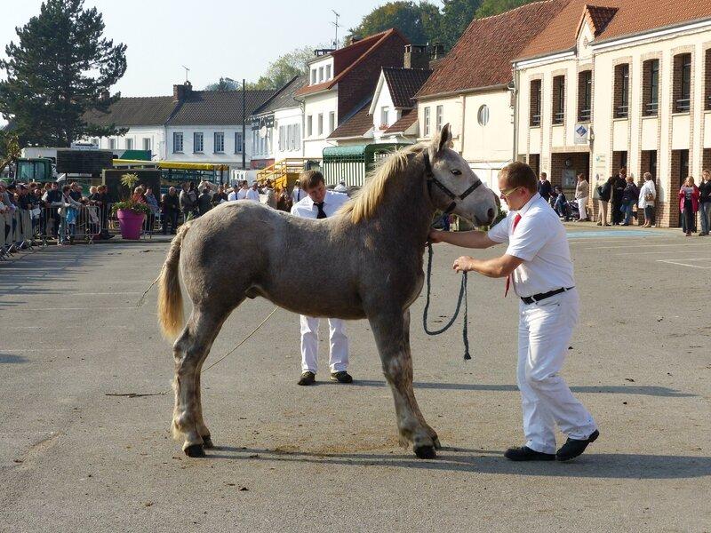 Flambeur de Tachincourt - Concours des Poulains - Hucqueliers - 11 Octobre 2015 - 4e (Mâles 6 mois (lot début année))