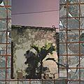 palmier St-Leu, impression sur aluminium