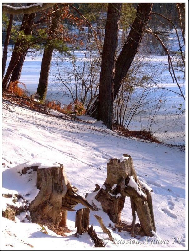 Forêt de Rambouillet sous la neige (7)
