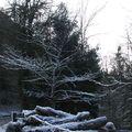 Sombre hiver