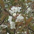 Le printemps est vraiment là! youpi
