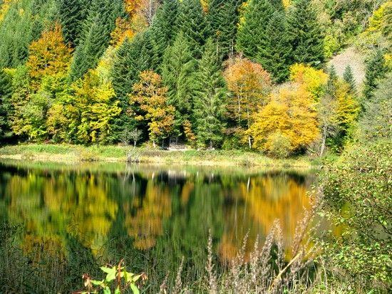 C_est_l_automne_au_Ballon_d_Alsace_010