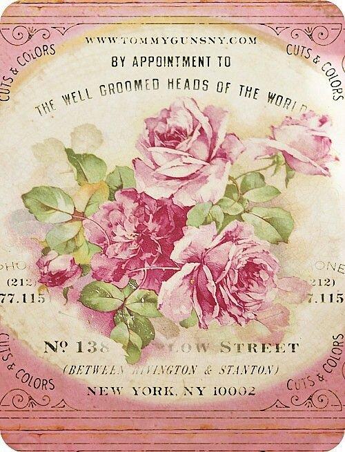 Roses pour Katia (1)