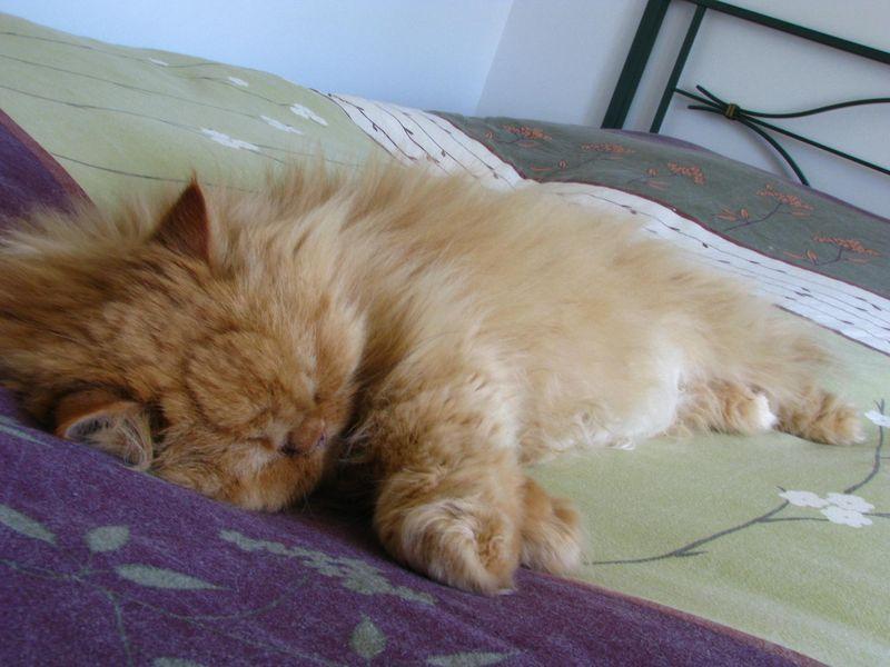 Kitty, 24 juin 2010.