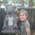 HOPITAL DES KOALAS Port Macquarie