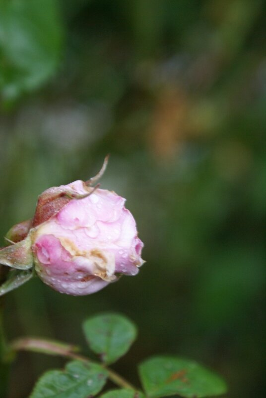 fleurs 010