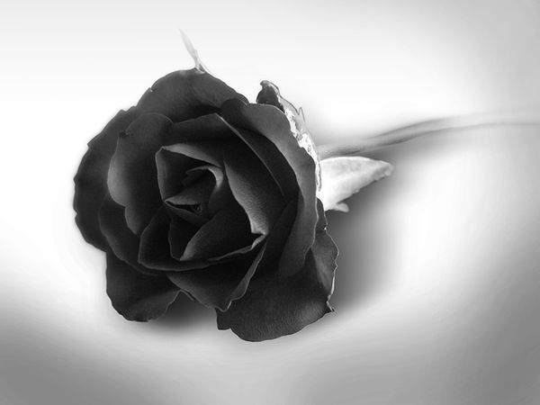 Black_Rose_by_sTTyleZ