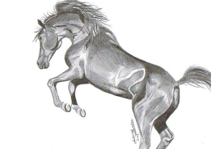 Etalon noir mes dessins - Dessin de cheval magnifique ...