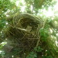Qui a construit ce joli nid?