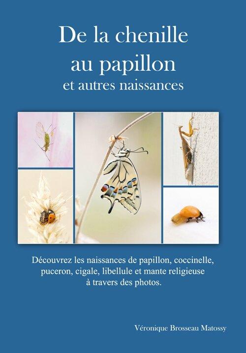 de-la-chenille-au-papillon-