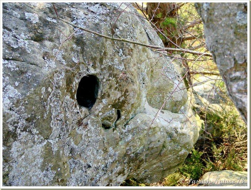 Les créatures des Vaux de Cernay (32)