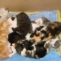 2008 04 01 Les chatons de Papillon et Blanco qui dorment tous