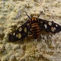 Papillon et sa ponte toute fraîche