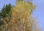 arbres_01