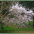 Prunus 2003152
